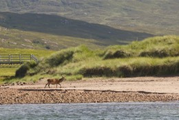 Pooltiel-House-Skye-deer-on-Rum-2014